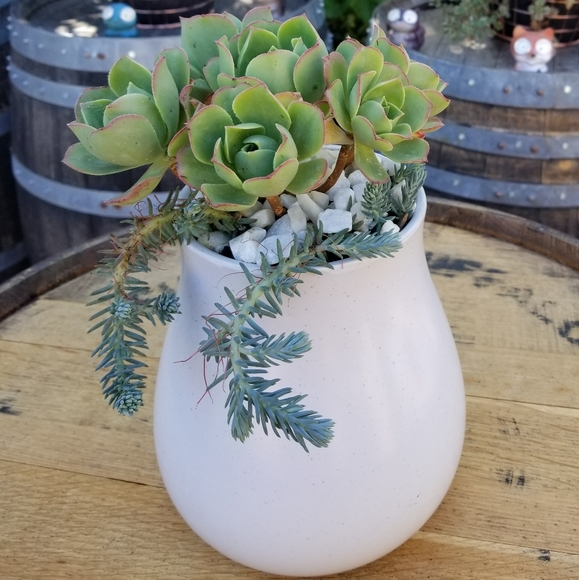 None Other - (SOLD) Rose succulent Large Base Planter